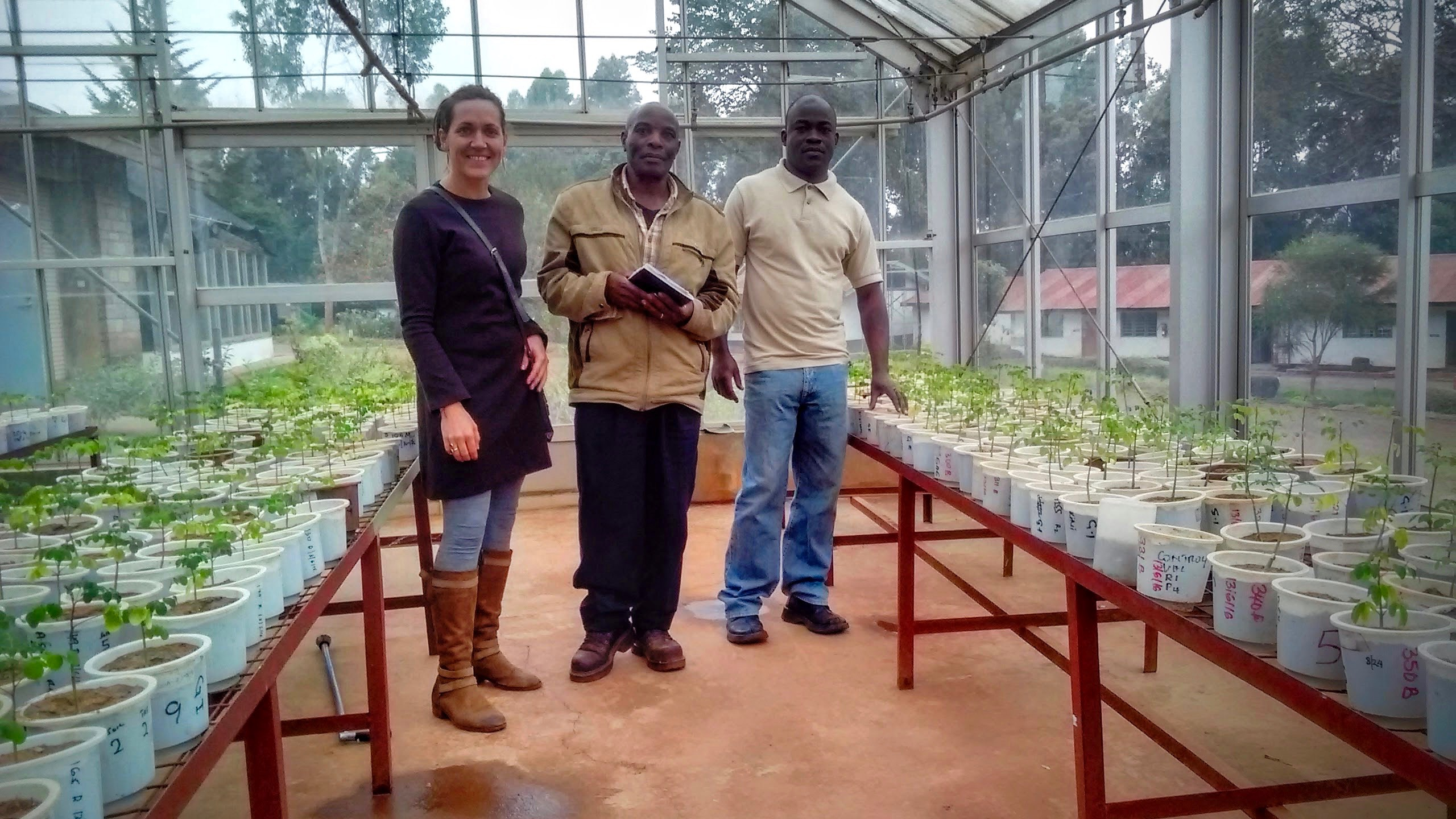 Waterman (left) during breeding experiments that determine the best varieties at The Kenya Forestry Research Institute.