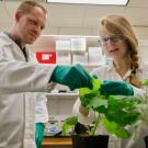 Zerbe and his student, Iris Mollhoff, working on using Nicotiana benthamiana for enzyme functional studies