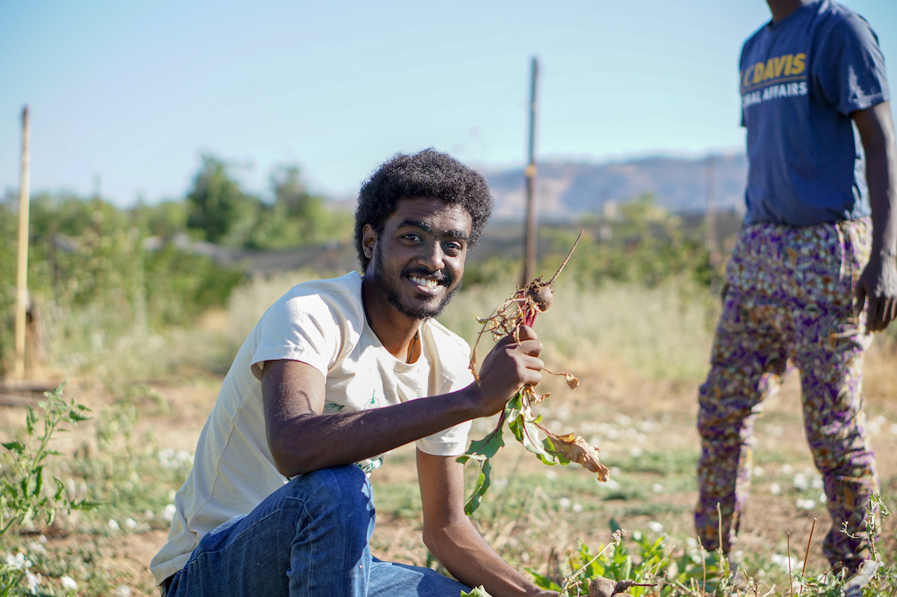 Abraham Genetu Tiruneh harvests beets at Gauchito Hill Farm in support of Yolo Food Bank