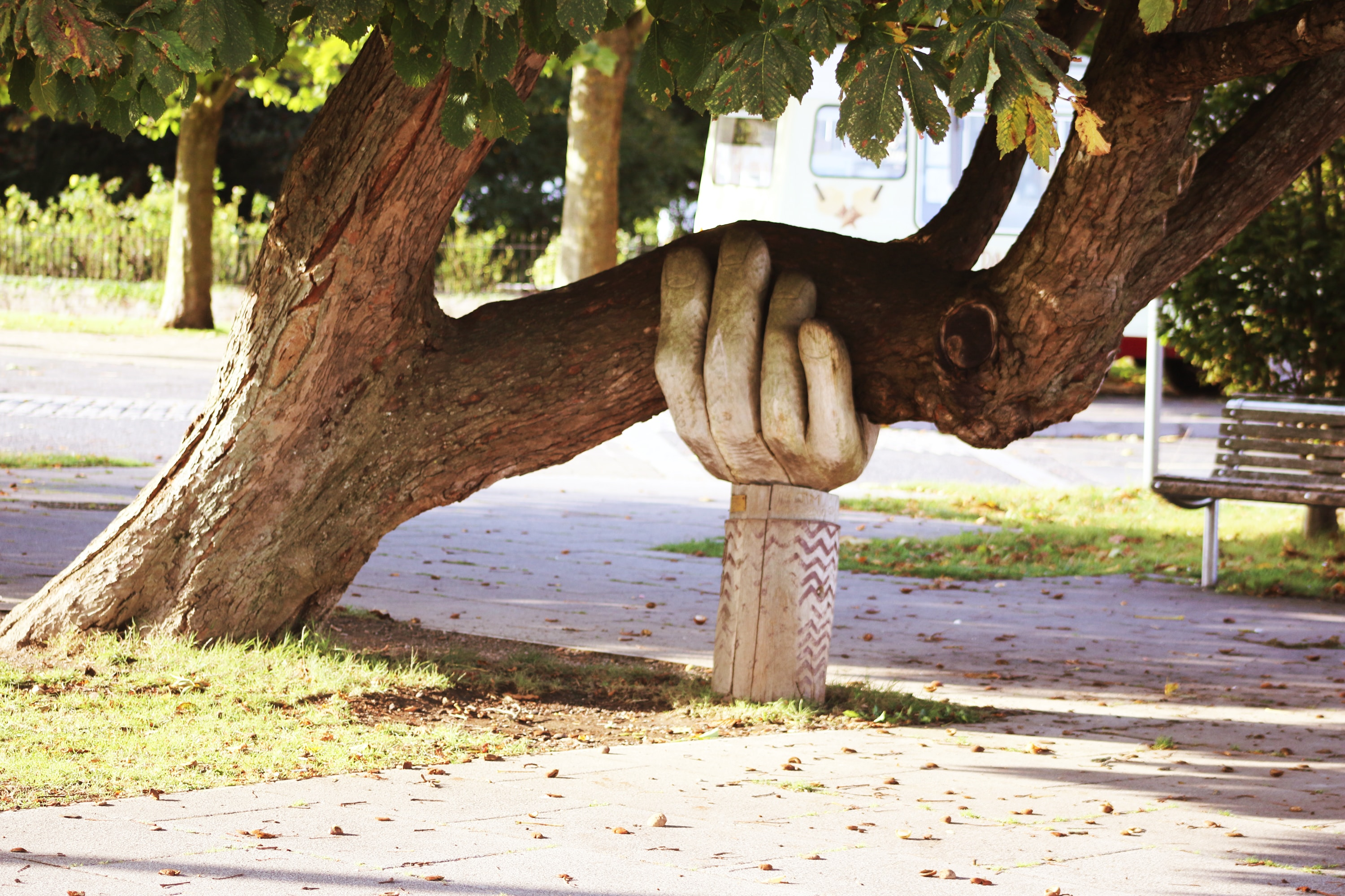 Arm holding tree up