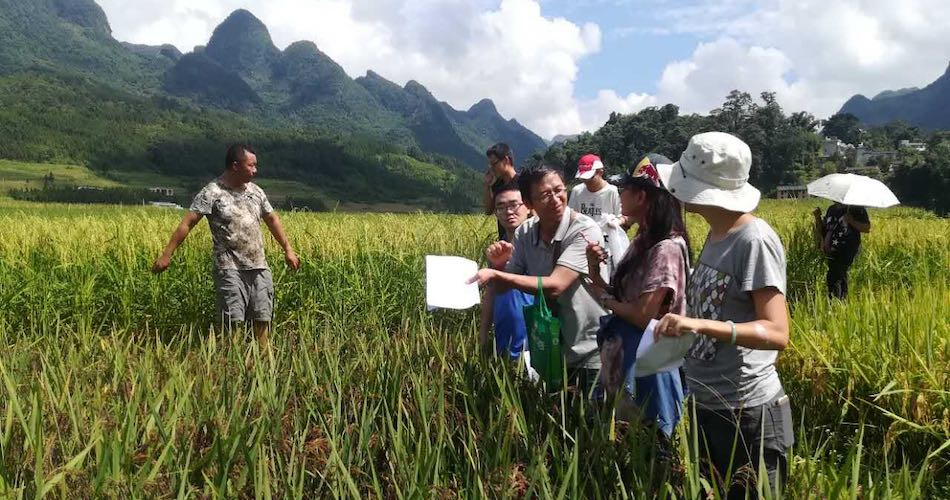 Bangbang Co-op consumers visiting a small farmer's organic rice field in a Zhuang village, southwest China, to learn about his farming practices. (Miaomiao Qi)