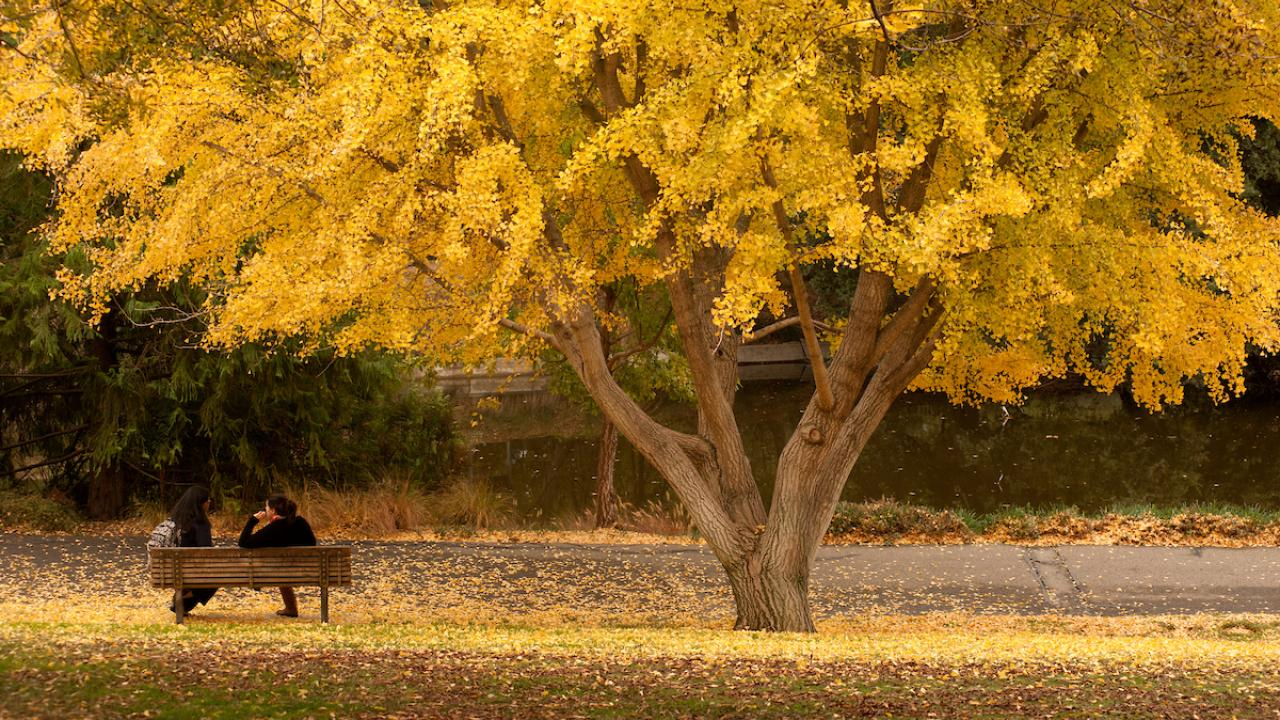 Two people talking on bench outside by tree