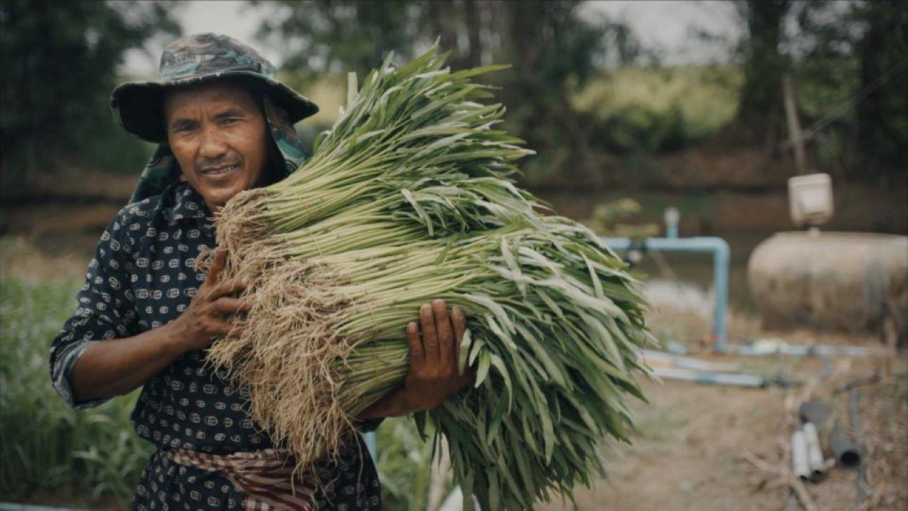 Cheang Sophat collects bundles of fresh water spinach from his fields to deliver to the Tasey Samaki Agricultural Cooperative's packinghouse, to fulfill a customer's order.