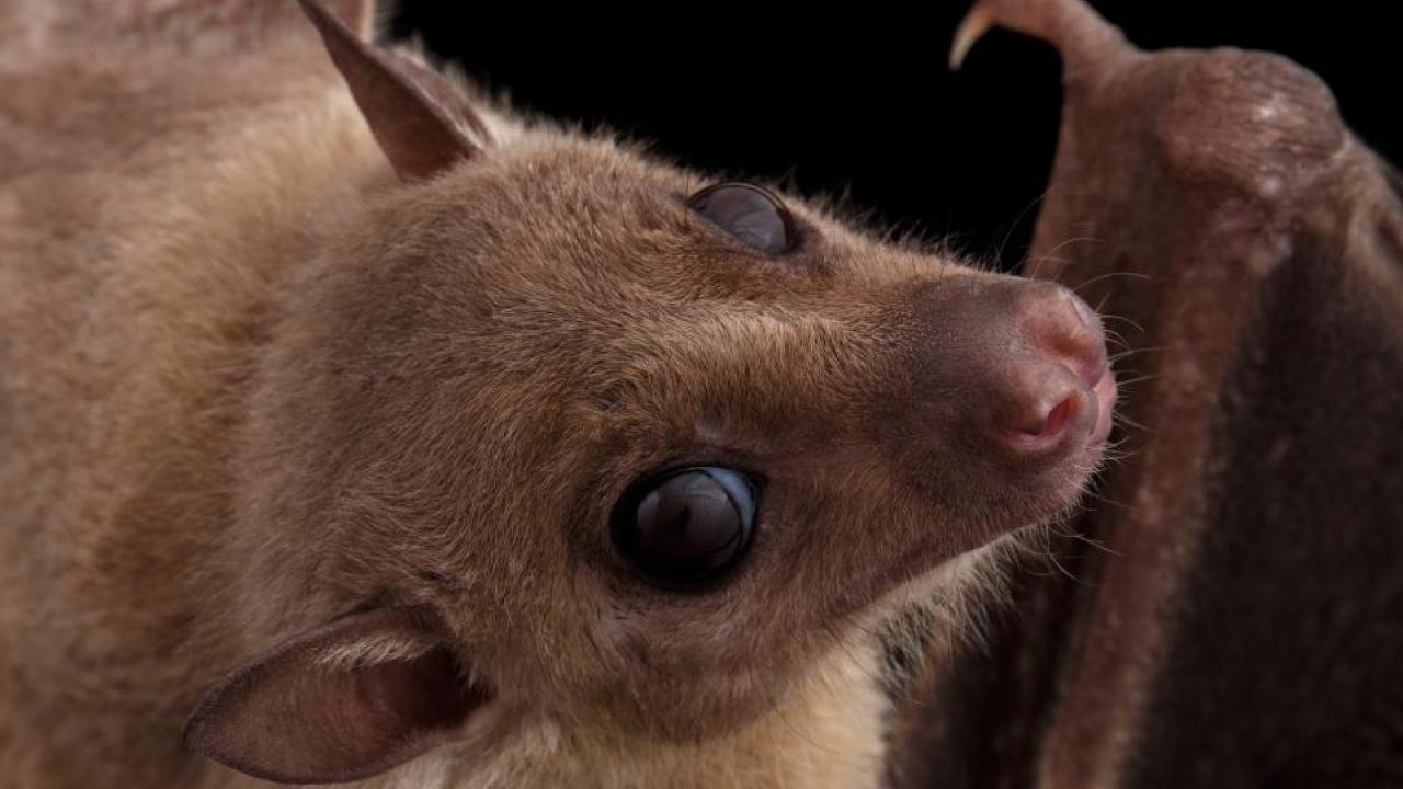 bat with disease